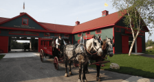 Horse drawn carriage at the stables